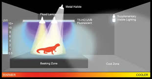 reptile fluorescent light fixtures an in depth look at uv light and its proper use with reptiles
