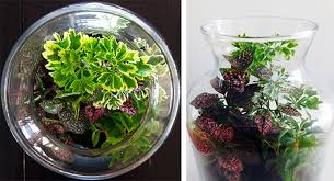 enclosed terrariums tips tricks and inspiration the plant hunter