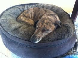 Comfortability Dictionary Comfort Wikipedia