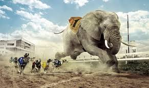 Elephant Meme - create meme two two elephant meme elephant pictures