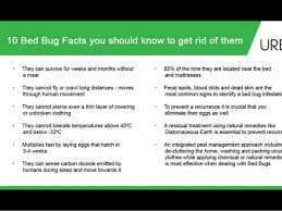 What Kills Bed Bugs Naturally How To Get Rid Of Flea U0026 Bed Bugs Naturally