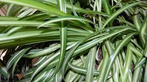 plante d駱olluante bureau 50 beau plante d interieur pour plante pour bureau sombre photos