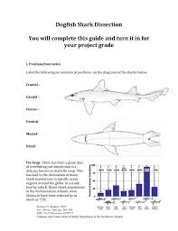 sketch the internal anatomy of the dogfish shark