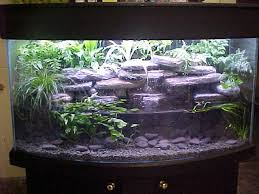 Live Plants In Community Aquariums by Best 25 Axolotl Tank Ideas On Pinterest Plant Fish Tank Fish