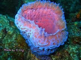 Strawberry Vase Sponge Image Gallery Of Vase Sponge