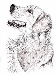 golden retreiver animal art by stephanie grimes stephanie grimes