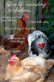 chickens in backyard 12 best sayings from tilly u0027s nest images on pinterest backyard