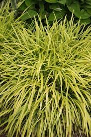 the best ornamental grasses for shade and sun plant delights nursery
