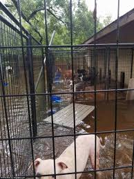 animal shelter last refuge for hundreds of cats and dogs daily