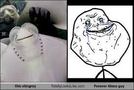 Forever Alone Guy Meme - this stingray totally looks like forever alone guy totally looks like