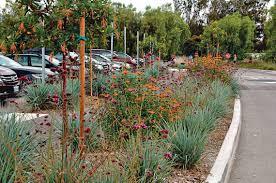 australian native plants for rock gardens video and photos the huntington in san marino has 12 botanical gardens on 120 acres