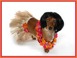 halloween costumes u0026 pets dressing your pet for halloween janet