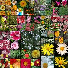 Types Of Garden Flowers Plant Inspirations Plant Nursery Sales Online Delivered
