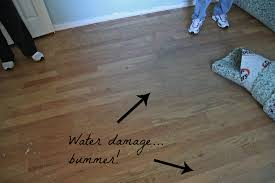 floor hardwood floor water damage on floor with laminate