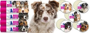 australian shepherd in spanish australian shepherd nose butter for dry crusty aussie noses