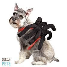 Dog Halloween Costume Ideas 11 Halloween Pet Costume Ideas Images Pet