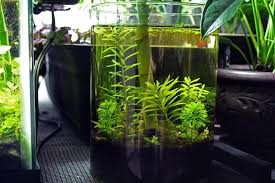 starting a low maintenance aquatic vase or bowl planted space