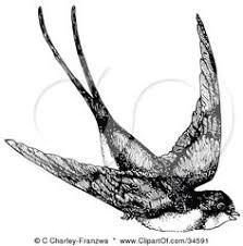 Barn Swallow Tattoo Designs Barn Swallow Birds Animals Antique Ilustration Illustration Art