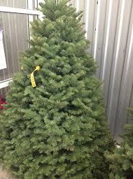 real u201d christmas trees in kl klkids