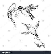 vector image hummingbird design on white stock vector 533847094