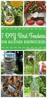 7 diy bird feeders for backyard birdwatchers