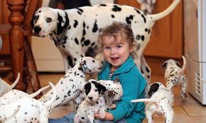 dalmatian puppies sale buying attractions