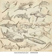animals sharks chordata collection hand drawn stock illustration