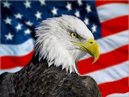 America Eagle Meme - images of american eagle flag wings wallpaper fan