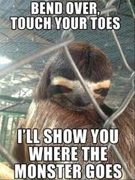 Sloth Jokes Meme - dump a day animals are the real masters of seduction 27 pics