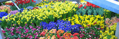 bulk flowers bulk flowers welcome to flowers by