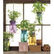Herb Window Box Indoor Mason Jar Indoor Herb Garden Grow Your Own Herbs Uncommongoods