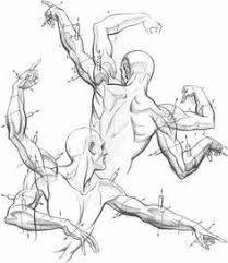Anatomy Of Human Body Sketches 401 Best Human Body Tutorials Images On Pinterest Drawings