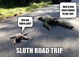 Funny Sloth Memes - i can has cheezburger sloths funny animals online cheezburger