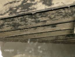 crawl space mold inspection