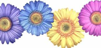 yellow daisy wallpapers photo collection bright gerber daisy wallpaper
