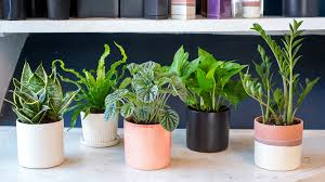 on stem and pyramid artificial modern tall indoor plants house uk