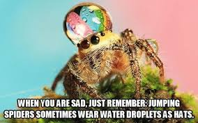 Cute Spider Meme - haha definitely not a spider lover at all but this is cute good
