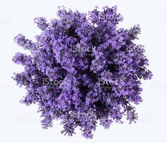 lavender bouquet top view of bouquet of purple lavender flowers lavandula bunch
