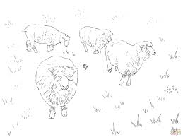 dorset sheep coloring page free printable coloring pages