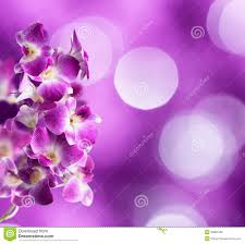 White Orchid Flower Purple And White Orchid Flower Royalty Free Stock Images Image