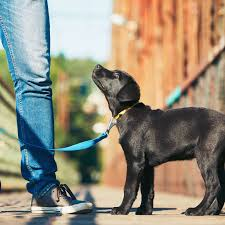 state with most dog owners 2016 average cost of pet insurance 2017 facts and figures valuepenguin