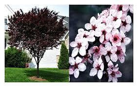 choice landscaping u0026 garden center trees