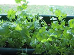 Window Box For Herbs Plants Easy For Kids To Grow Gardening With Children
