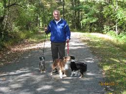 australian shepherd standard hiking wih dogs u2013 alangus mini aussies a dog blog
