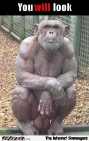 Monkey Meme - look at my balls monkey meme pmslweb