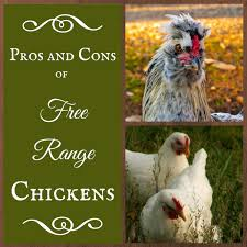 Keeping Free Range Chickens In Your Backyard The Pros And Cons Of Free Range Chickens The Free Range Life