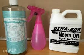 natural pest control for houseplants just say no to toxic
