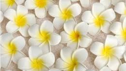 Hawaian Decorations Hawaiian Decorations For Parties Online Hawaiian Decorations For