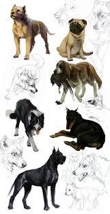 banana joe affenpinscher pedigree 92 best dog images on pinterest animals low poly and google search