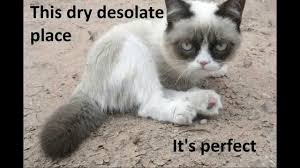 Grumpy Kitty Meme - grumpy cat meme youtube